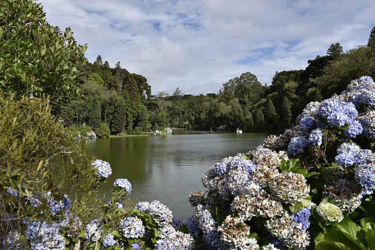 Hortênsias no Parque do Lago Negro em Gramado