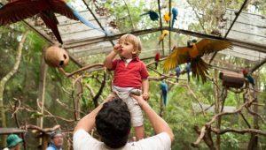 Foz do Iguaçu com as crianças - Parque das Aves