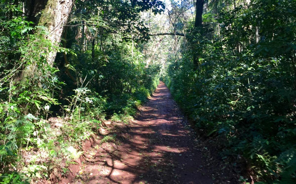 Trilha do Poço Preto - Parque Nacional em Foz do Iguaçu