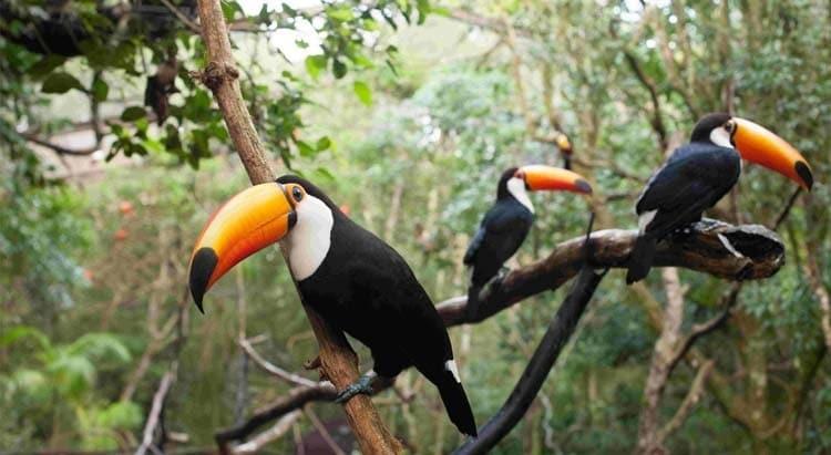 Turismo em Foz do Iguaçu: Parque das Aves.