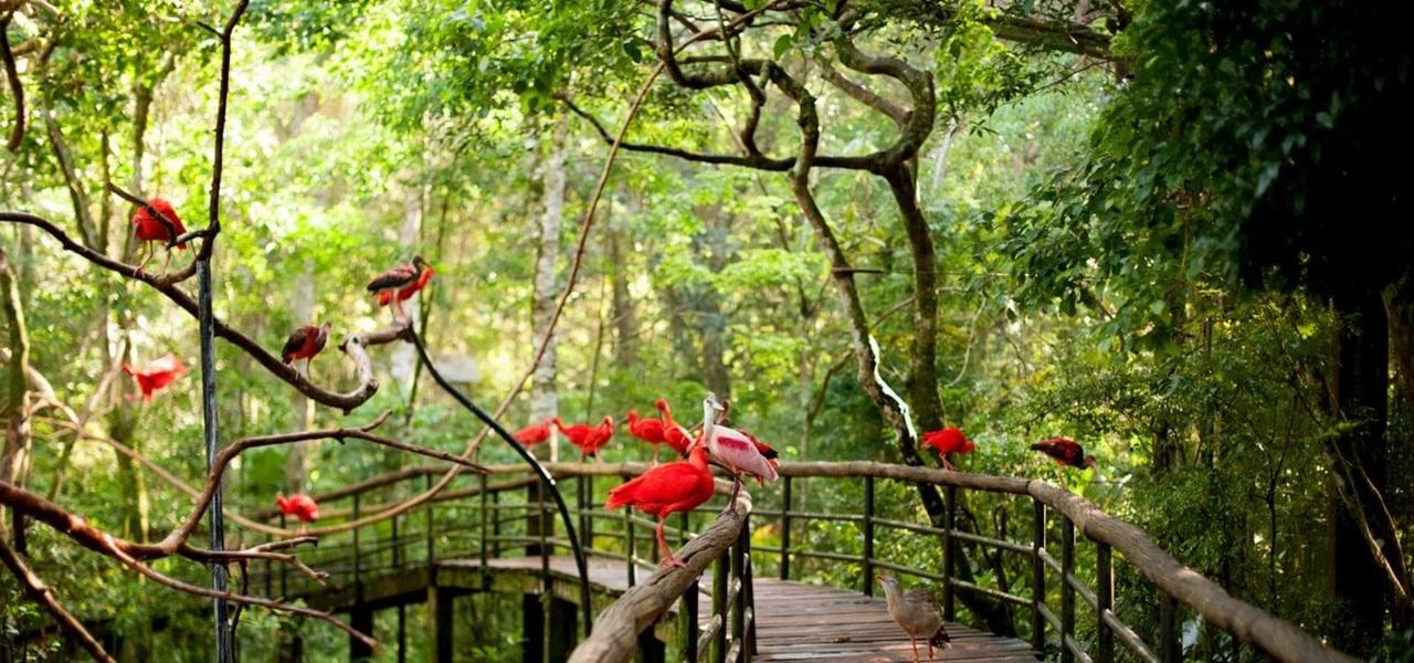 Turismo em Foz do Iguaçu: Parque das Aves retoma atendimento às segundas-feiras
