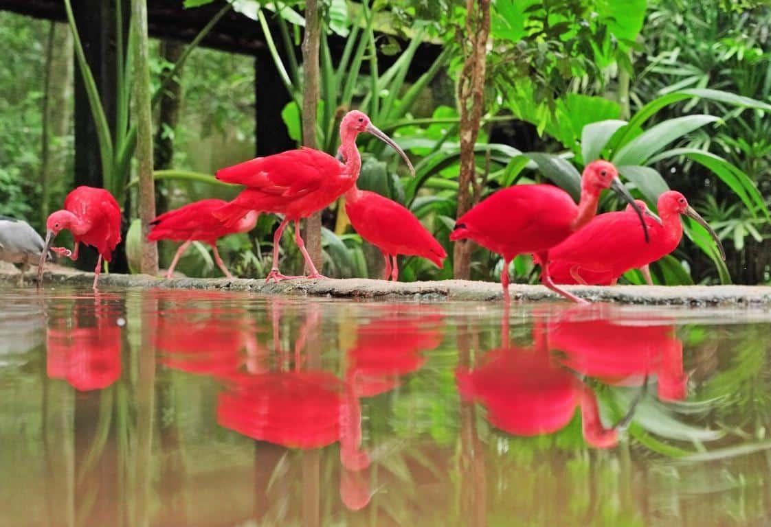 Pássaros bebendo água no Parque das Aves em Foz do Iguaçu